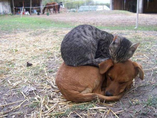gatos-dormidos19