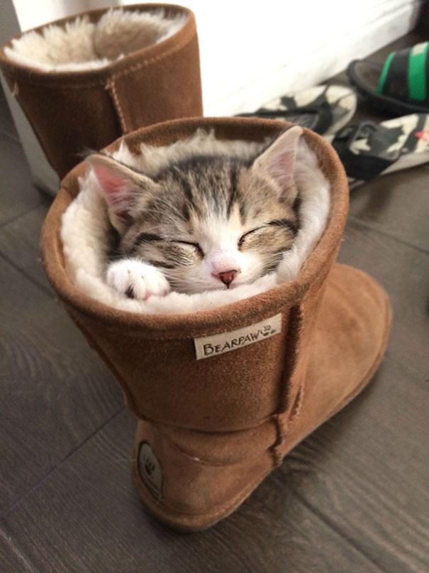 gatos-dormidos2