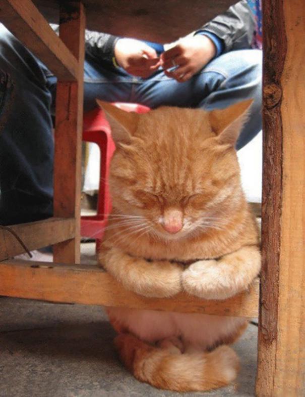 gatos-dormidos21