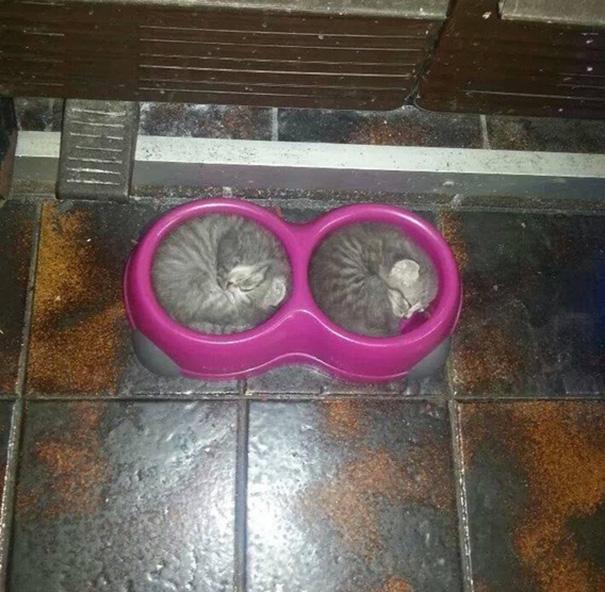 gatos-dormidos6