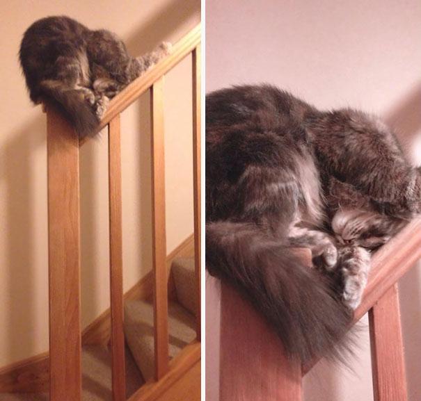 gatos-dormidos9