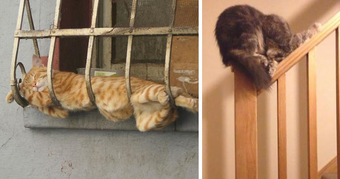 gatos-dormir