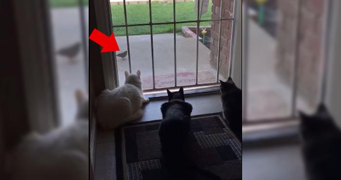 gatos-pajaro