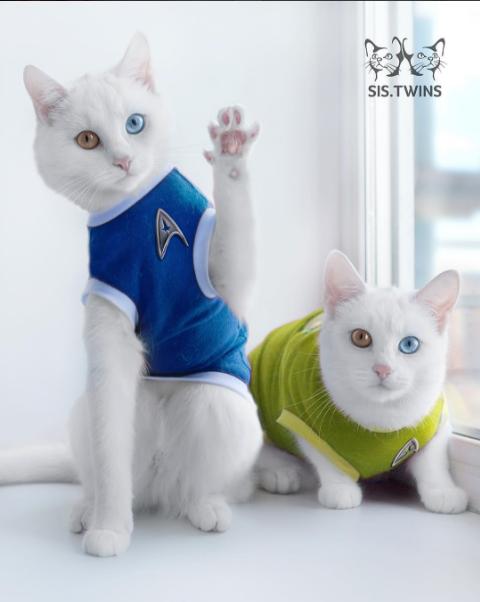iriss y abyss las gatas albinas gemelas con ojos de distinto color 5