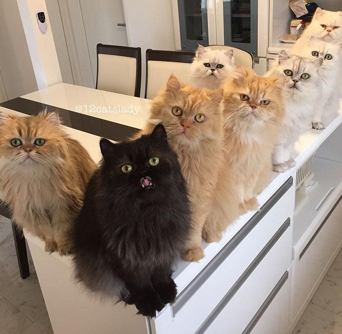 la mujer de los 12 gatos en japon 1