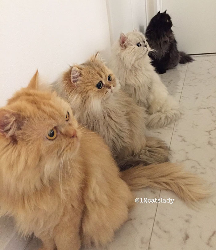 la mujer de los 12 gatos en japon 10