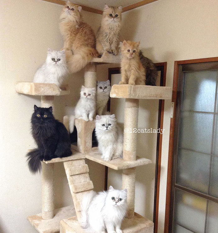 la mujer de los 12 gatos en japon 11