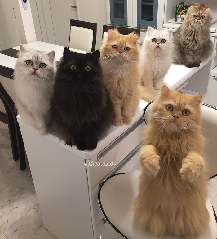 la mujer de los 12 gatos en japon 12