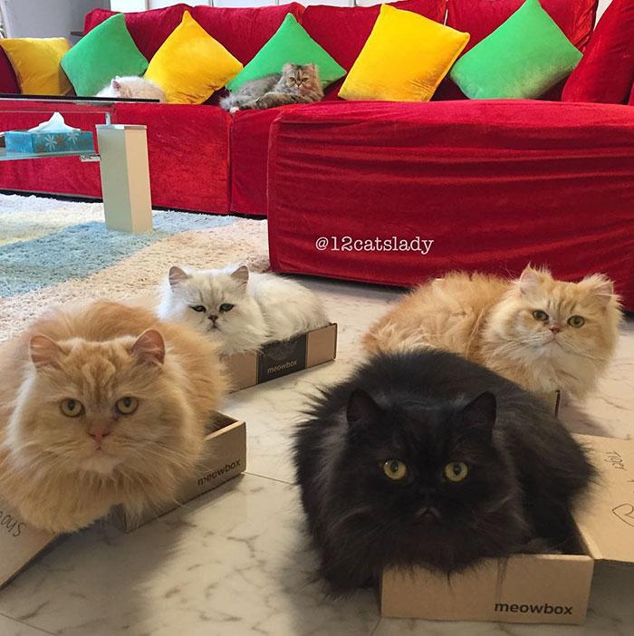 la mujer de los 12 gatos en japon 13