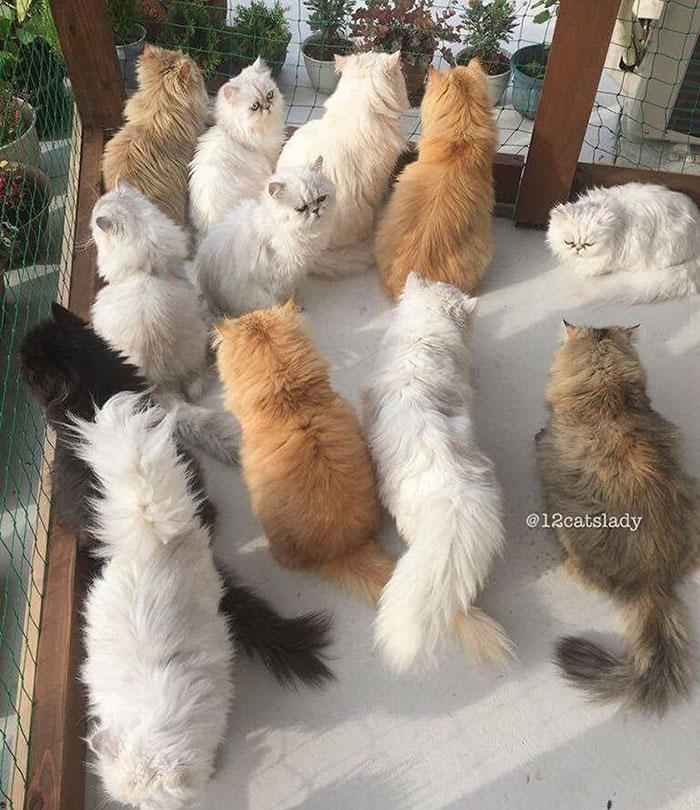 la mujer de los 12 gatos en japon 14