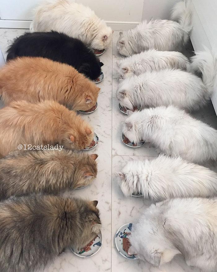 la mujer de los 12 gatos en japon 3