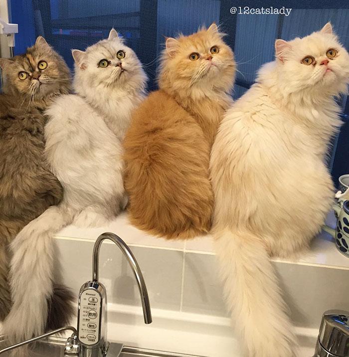 la mujer de los 12 gatos en japon 6
