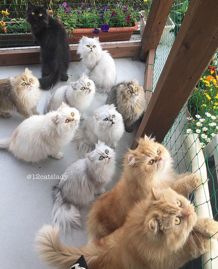 la mujer de los 12 gatos en japon 7