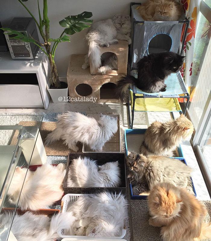 la mujer de los 12 gatos en japon 9