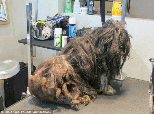 perro rescatado y corte de pelo 1