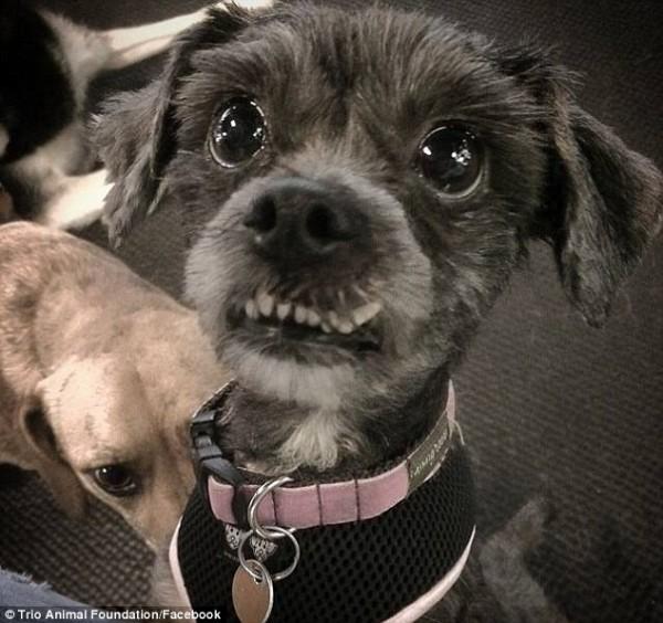 perro rescatado y corte de pelo 12