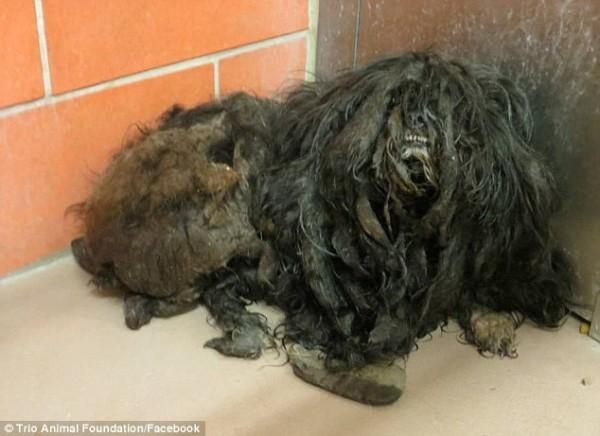 perro rescatado y corte de pelo 2