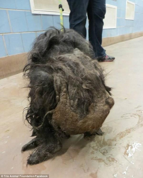 perro rescatado y corte de pelo 3