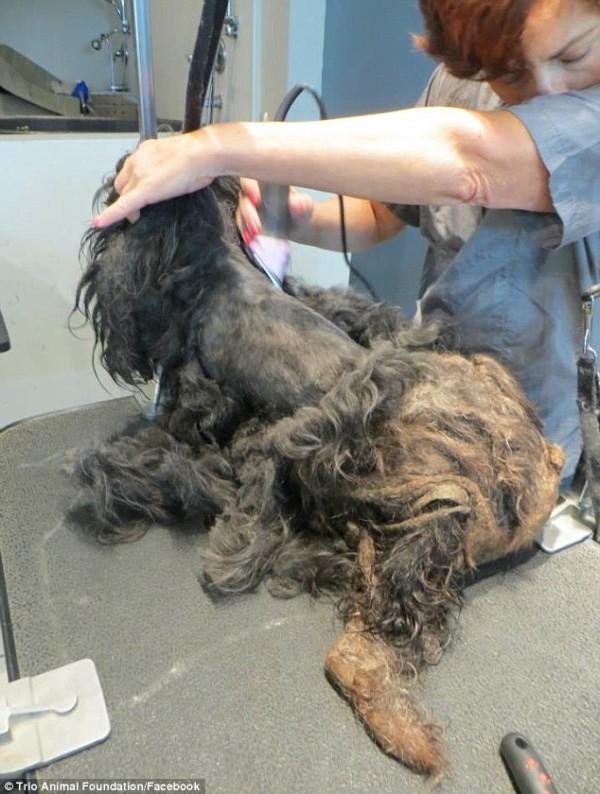 perro rescatado y corte de pelo 4