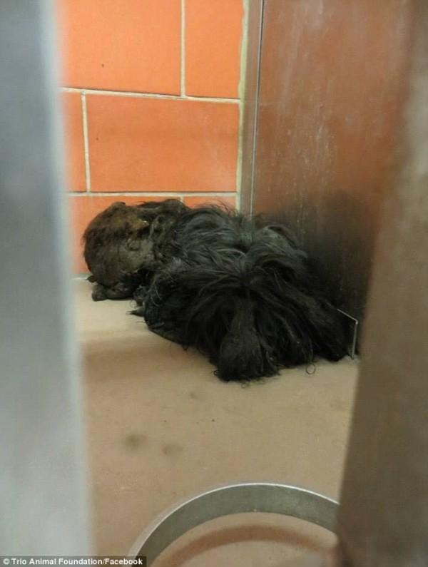 perro rescatado y corte de pelo 5