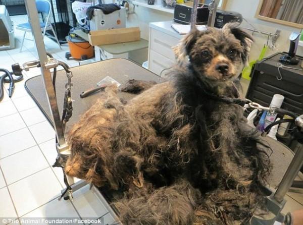 perro rescatado y corte de pelo 6
