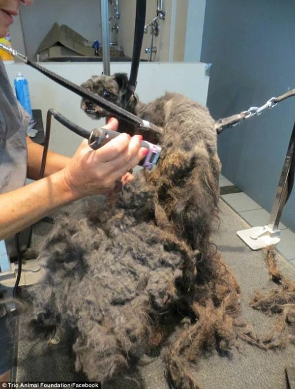 perro rescatado y corte de pelo 7