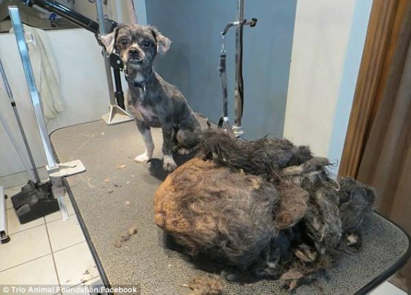 perro rescatado y corte de pelo 8