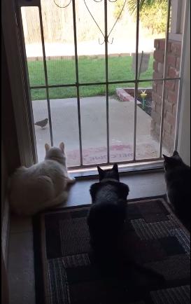 susto-perro-gatos2