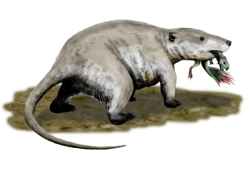 dinosaurios 8