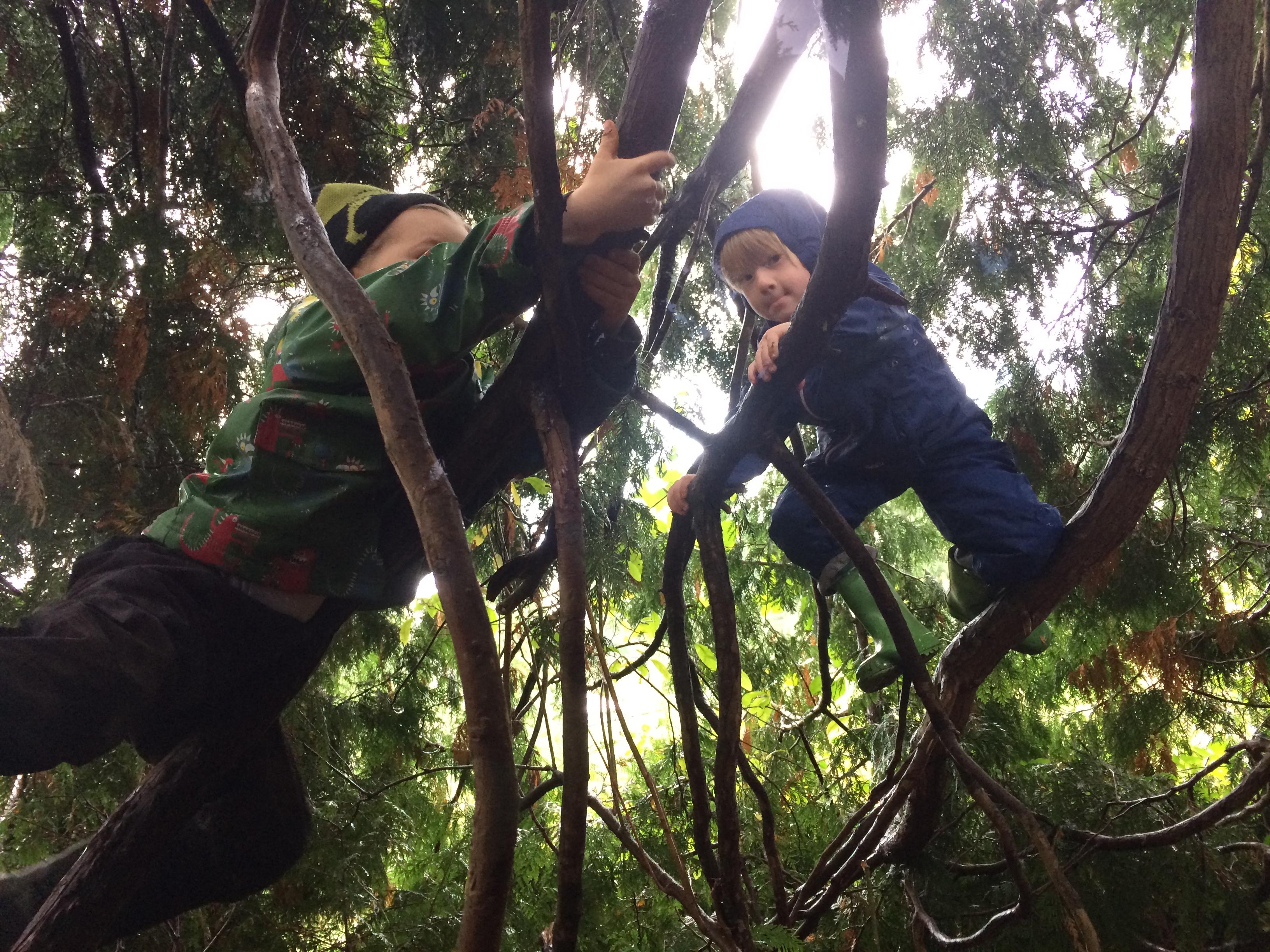 escuela bosque 2