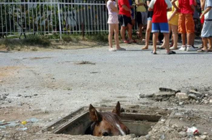 fotos graciosas de animales y sus frases 16