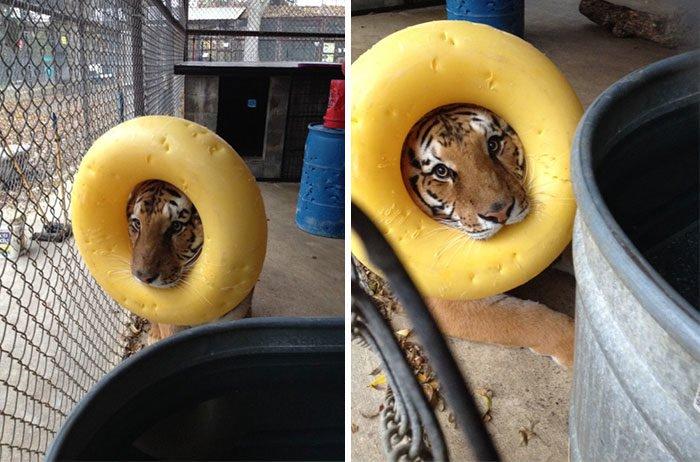fotos graciosas de animales y sus frases 2