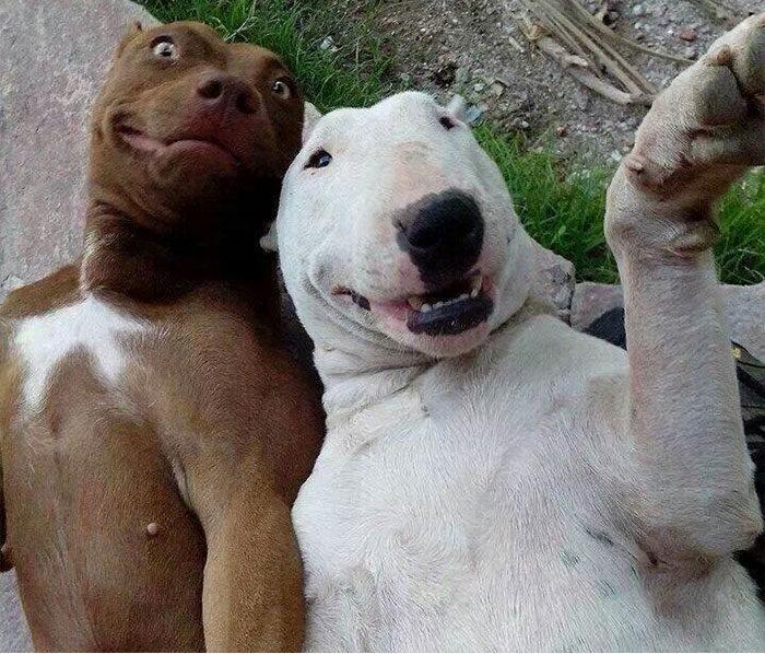 fotos graciosas de animales y sus frases 22