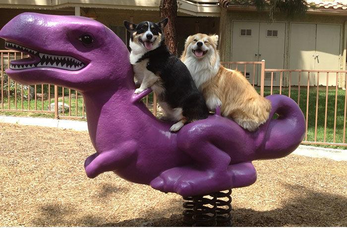 fotos graciosas de animales y sus frases 23