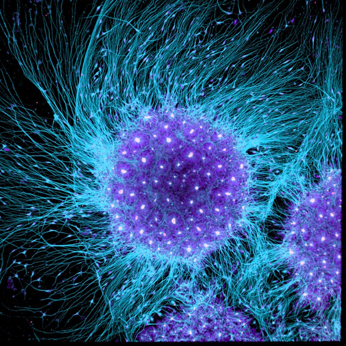 fotos microscopicas 14