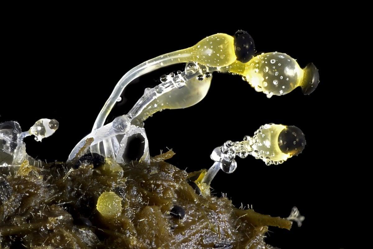 fotos microscopicas 15