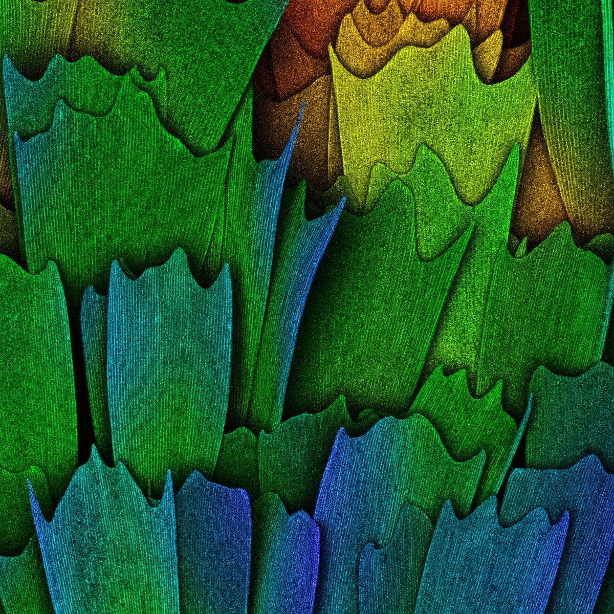 fotos microscopicas 16