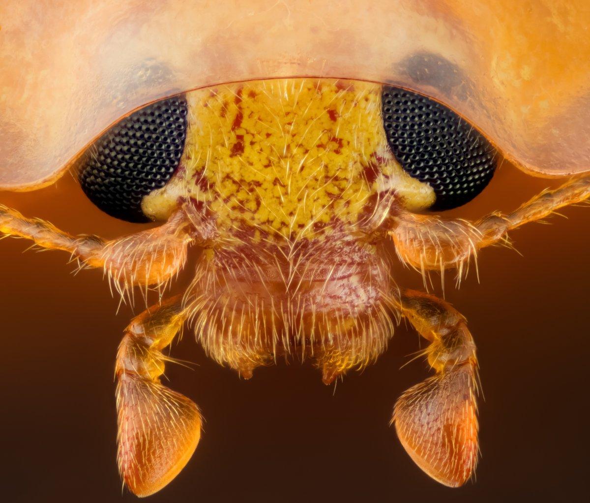 fotos microscopicas 20