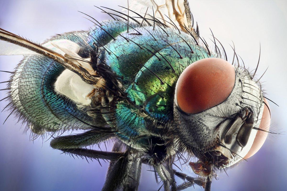 fotos microscopicas 24
