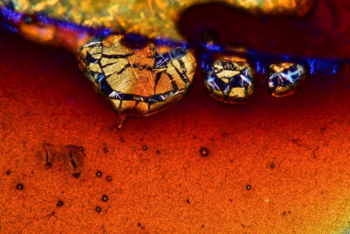 fotos microscopicas 36