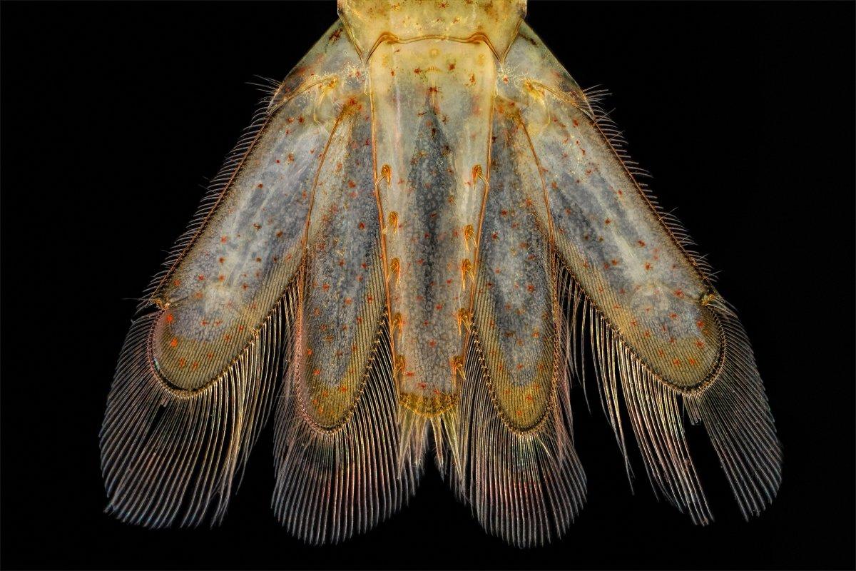 fotos microscopicas 39