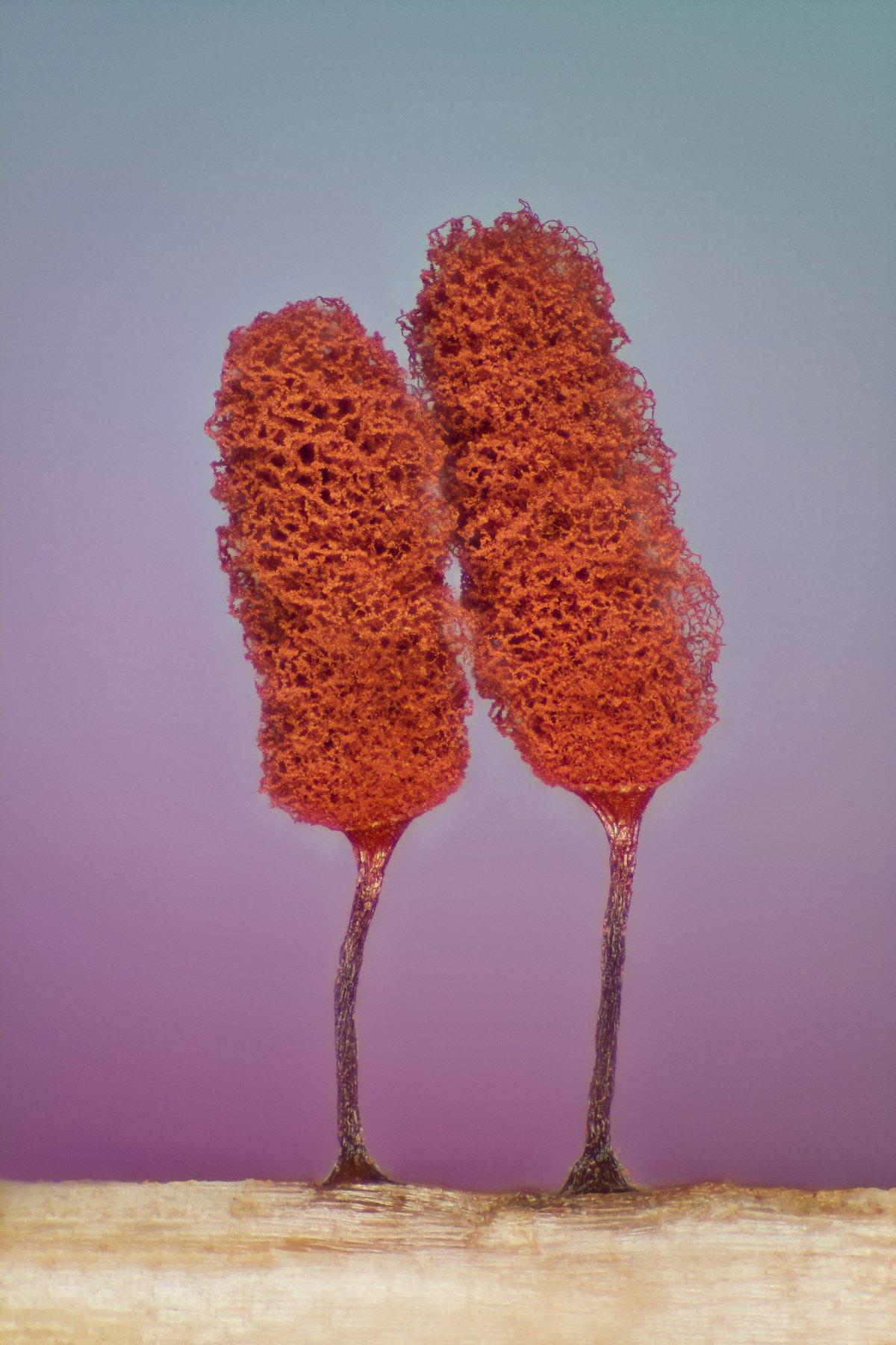 fotos microscopicas 4
