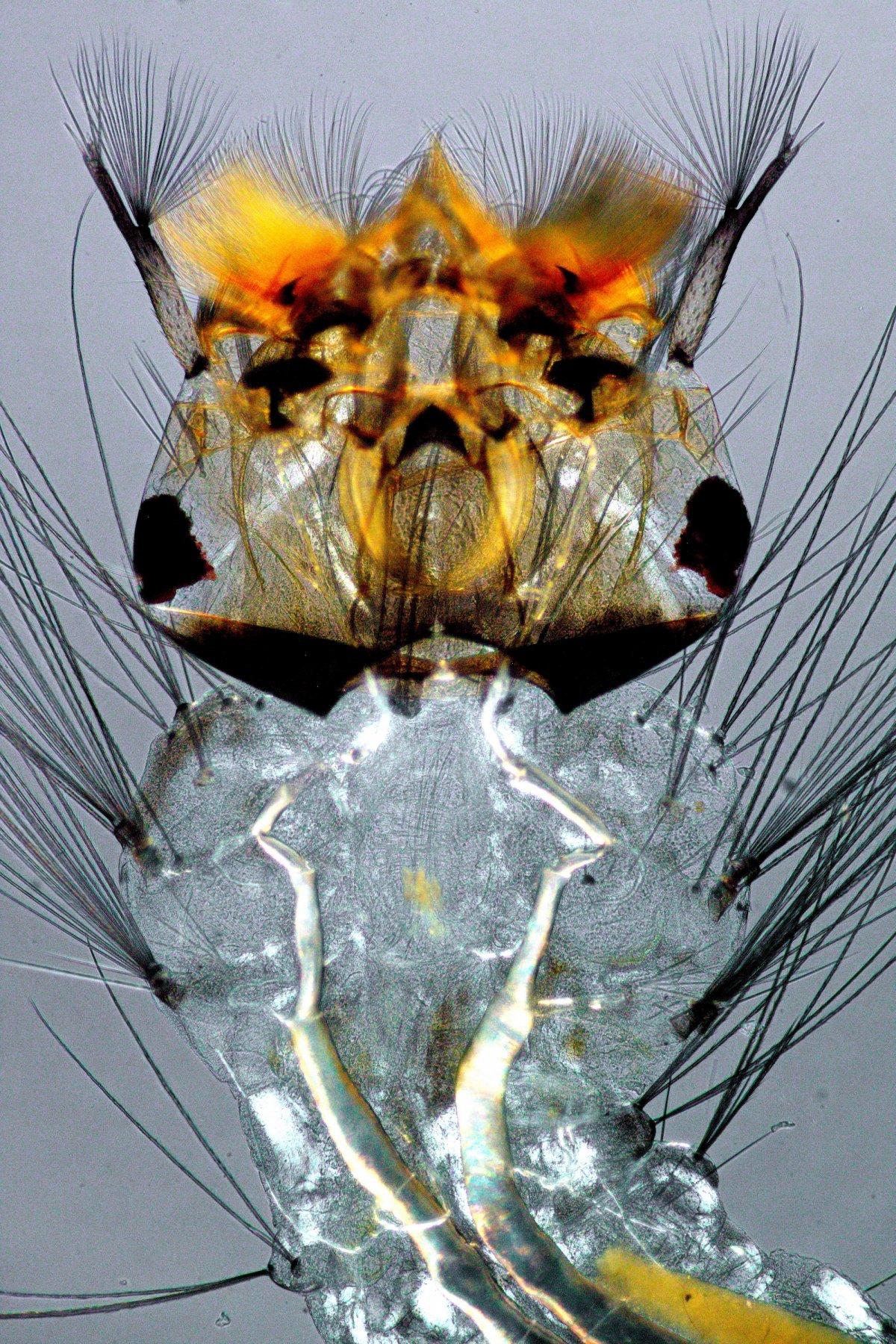 fotos microscopicas 43
