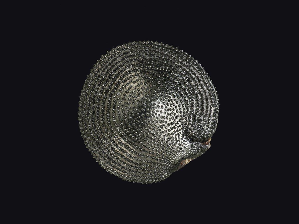 fotos microscopicas 50