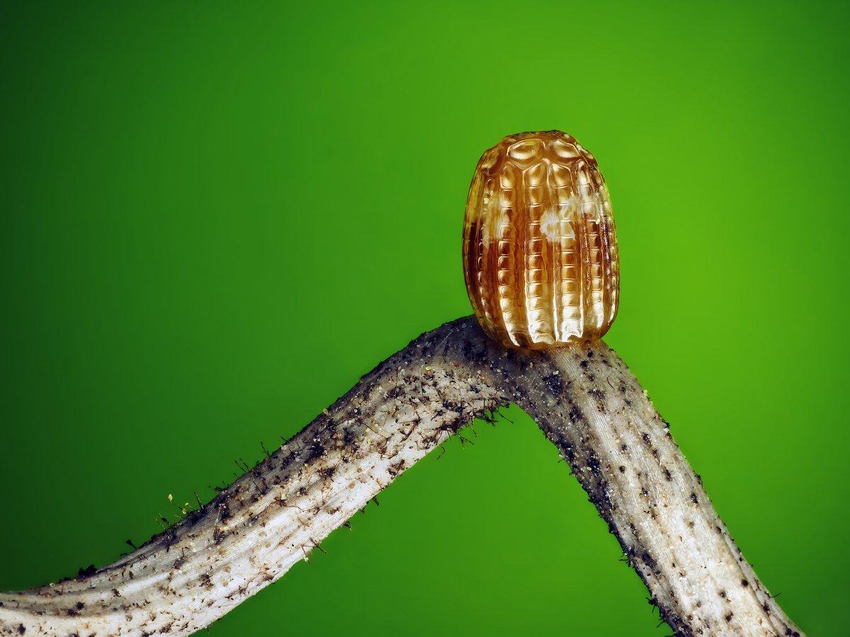 fotos microscopicas 51