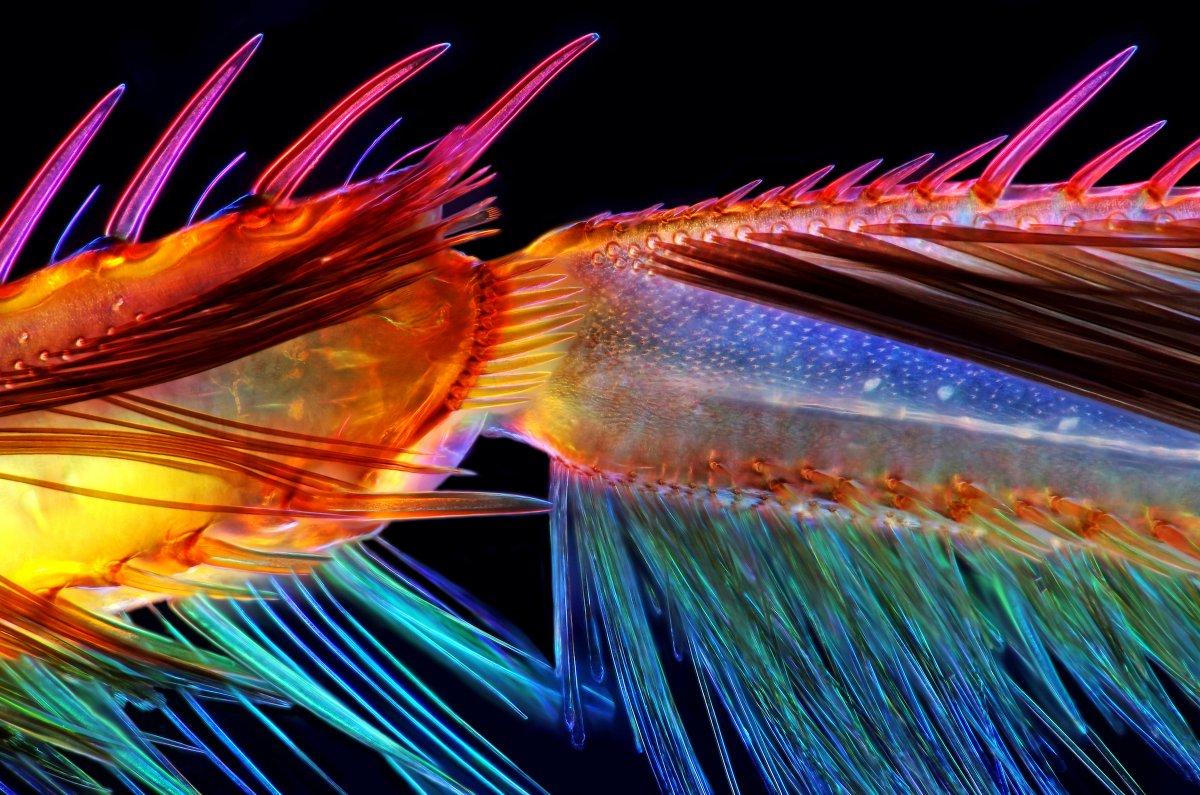 fotos microscopicas 54