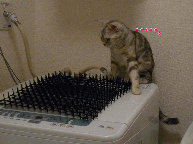 invento-gatos1