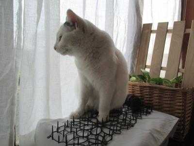 invento-gatos13