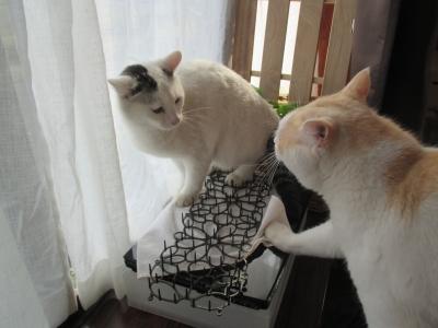 invento-gatos14