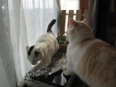 invento-gatos15